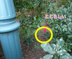 京都御所三角点2